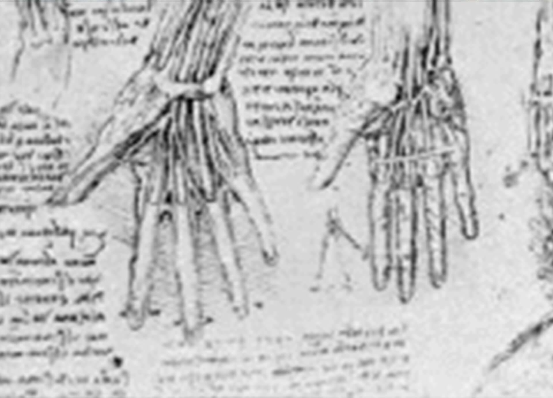 fingertip injuries img - Dr Cameron Mackay